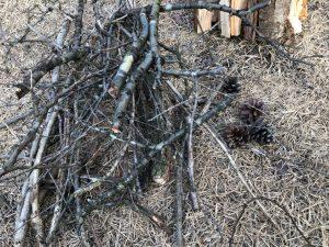 拾った木の枝と松ぼっくり